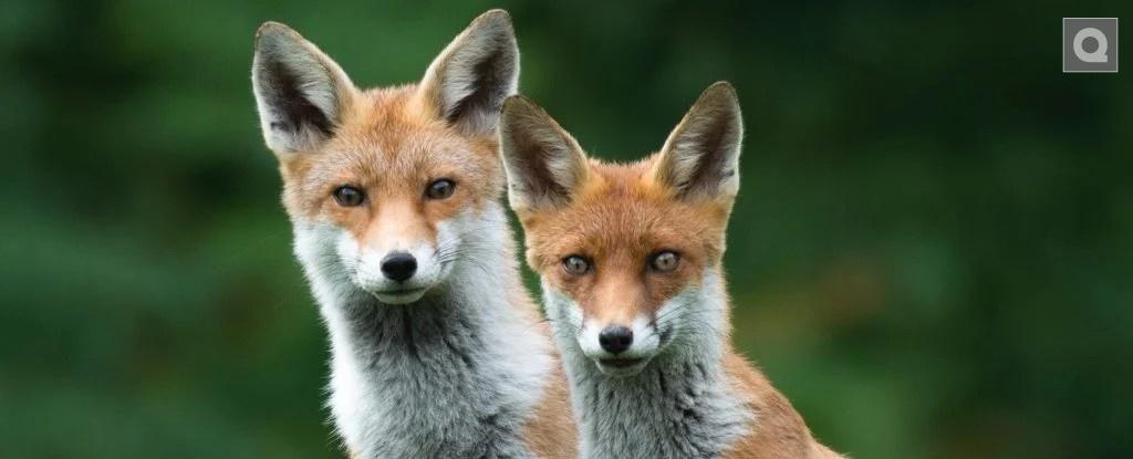 科学家警告说,支离破碎的自然意味着野生动物无法长期生存